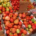 sf_farmers_market104