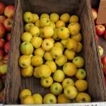 sf_farmers_market112