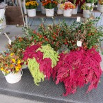 sf_farmers_market20