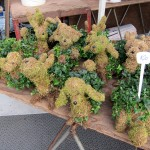 sf_farmers_market22