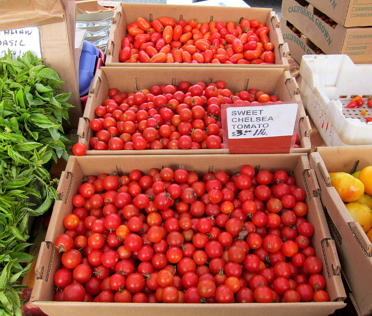 sf_farmers_market51