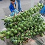 sf_farmers_market82