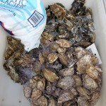 sf_farmers_market_seafood2