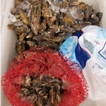sf_farmers_market_seafood3