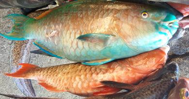 Catch of the Day: Roi, Kole, Uhu, Menpachi, Kala, To'au, Knifejaw & Broomfish